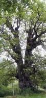 La Foresta Mercadante